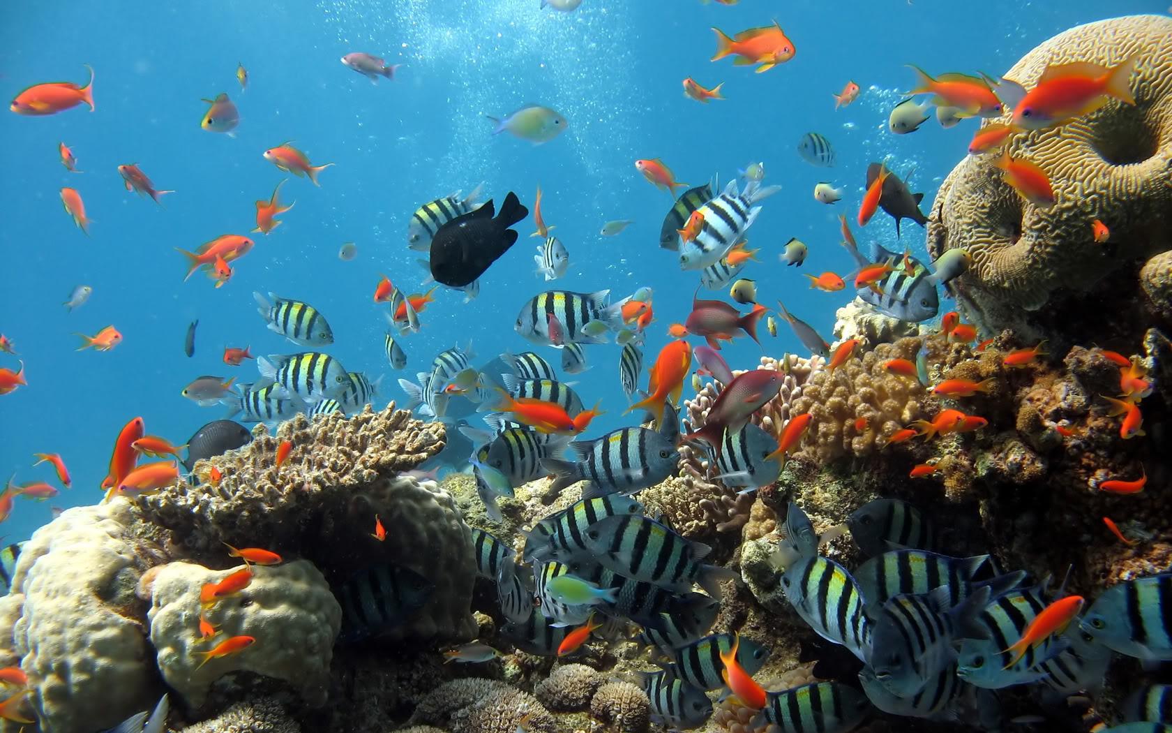 Rafy koralowe w Dahabie
